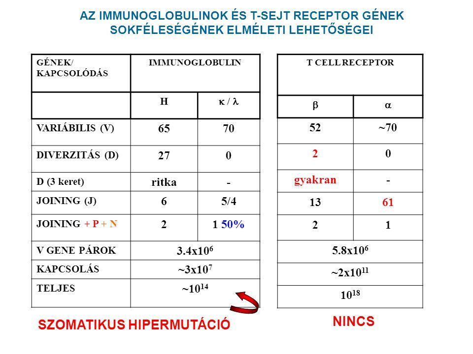 GÉNEK/ KAPCSOLÓDÁS IMMUNOGLOBULIN H  / VARIÁBILIS (V) 6570 DIVERZITÁS (D) 270 D (3 keret) ritka- JOINING (J) 65/4 JOINING + P + N 21 50% V GENE PÁROK 3.4x10 6 KAPCSOLÁS ~3x10 7 TELJES ~10 14 SZOMATIKUS HIPERMUTÁCIÓ AZ IMMUNOGLOBULINOK ÉS T-SEJT RECEPTOR GÉNEK SOKFÉLESÉGÉNEK ELMÉLETI LEHETŐSÉGEI T CELL RECEPTOR  52~70 20 gyakran- 1361 21 5.8x10 6 ~2x10 11 10 18 NINCS
