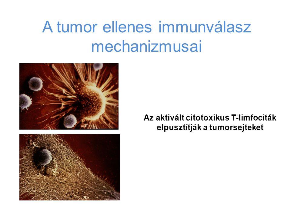 A tumor ellenes immunválasz mechanizmusai Az aktivált citotoxikus T-limfociták elpusztítják a tumorsejteket