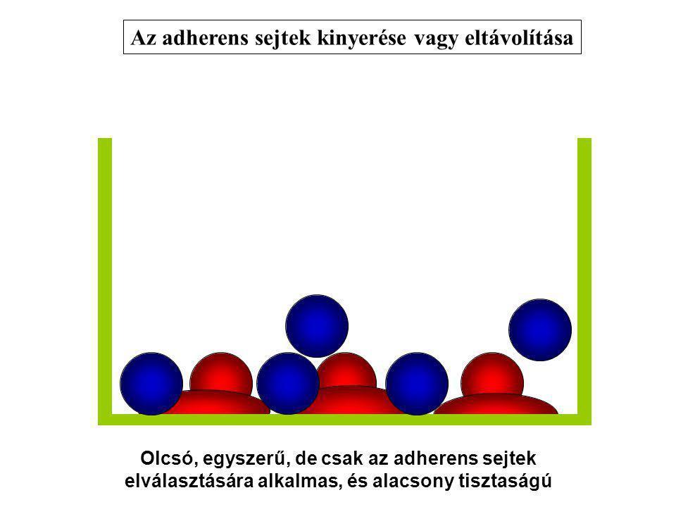 Az adherens sejtek kinyerése vagy eltávolítása Olcsó, egyszerű, de csak az adherens sejtek elválasztására alkalmas, és alacsony tisztaságú