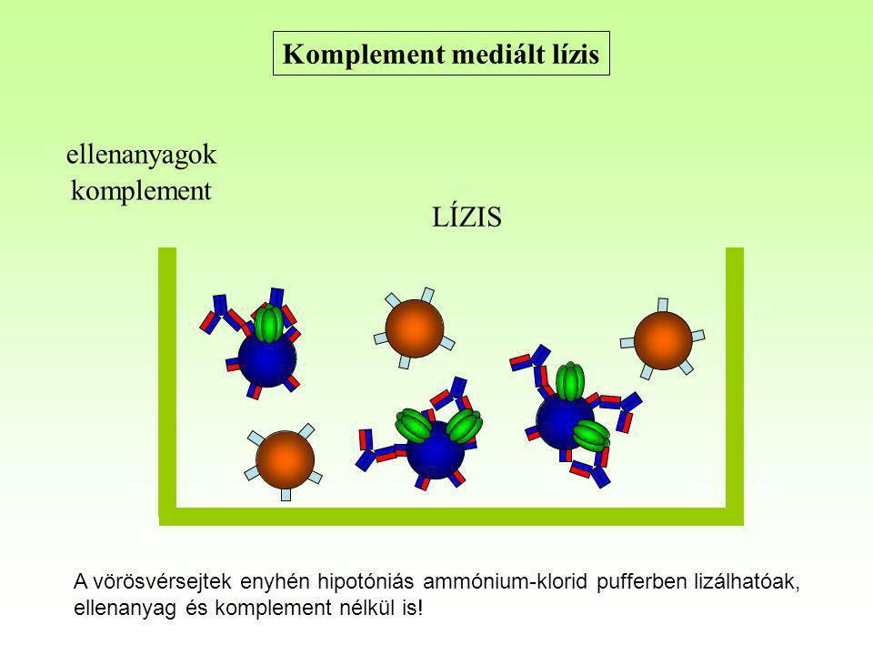 Komplement mediált lízis ellenanyagok komplement LÍZIS A vörösvérsejtek enyhén hipotóniás ammónium-klorid pufferben lizálhatóak, ellenanyag és komplem