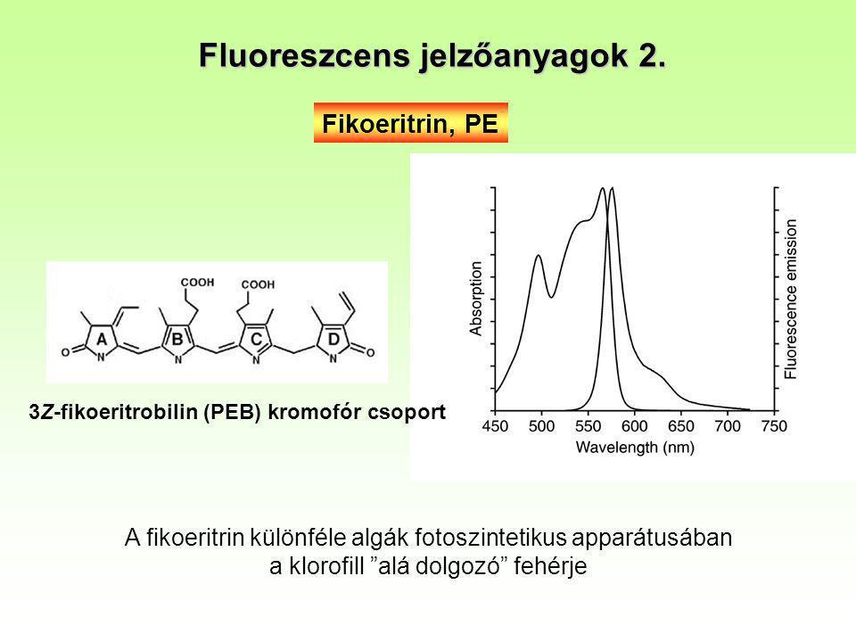 Fikoeritrin, PE 3Z-fikoeritrobilin (PEB) kromofór csoport Fluoreszcens jelzőanyagok 2. A fikoeritrin különféle algák fotoszintetikus apparátusában a k