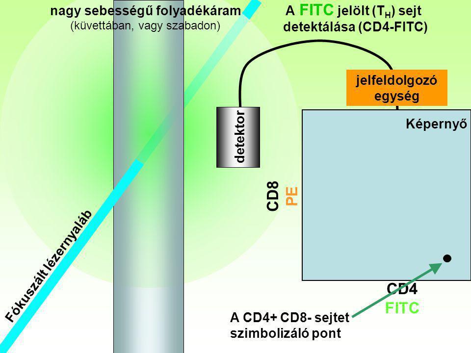 Fókuszált lézernyaláb Th nagy sebességű folyadékáram (küvettában, vagy szabadon) CD4 FITC CD8 PE detektor A FITC jelölt (T H ) sejt detektálása (CD4-F