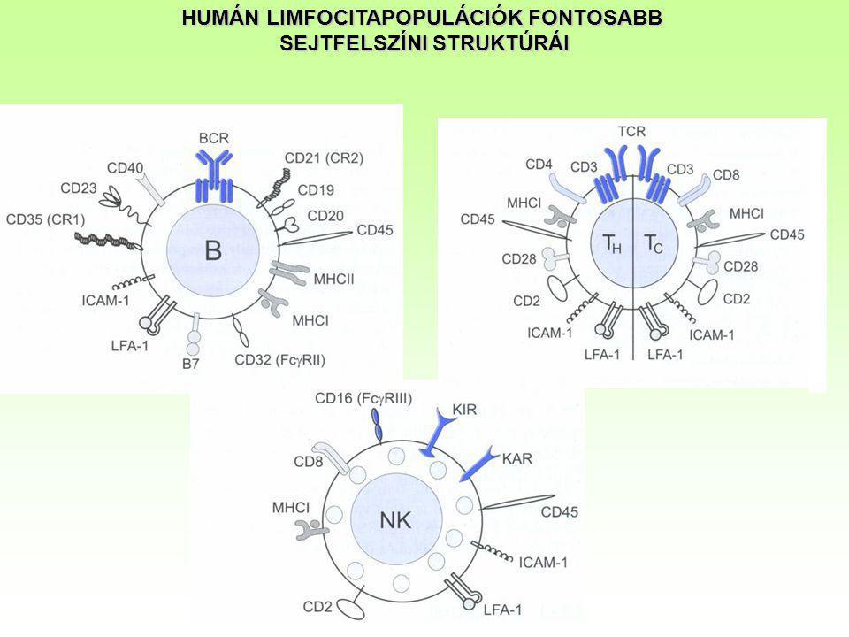 Az immunrendszer sejtjeinek jellemzése sejtfelszíni antigének* alapján A sejtfelszíni markerek alapján jellemezhető a sejtek funkcionális állapota is (nyugvó/aktivált) és diagnosztikus értéke is lehet  a sejttípusok jellemző százalékos arányának megváltozása,  rendellenes sejtfelszíni markerek megjelenése,  egyes markerek mennyiségének megváltozása, eltűnése esetén.
