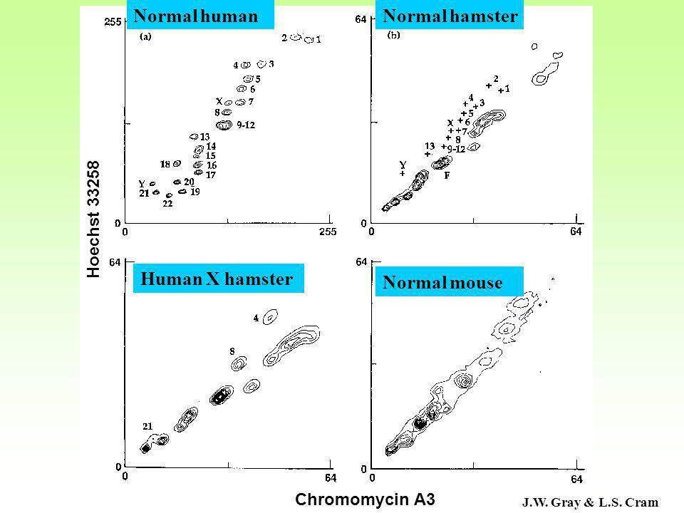 J.W. Gray & L.S. Cram Normal human Human X hamster Normal hamster Normal mouse Chromomycin A3 Hoechst 33258