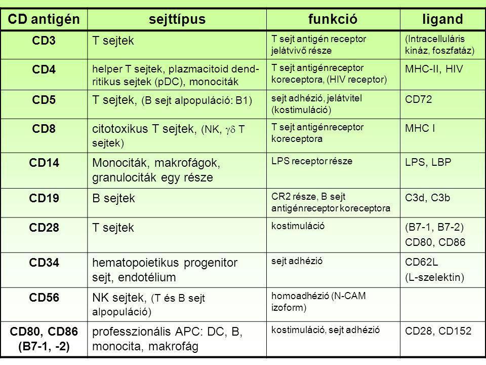 CD antigénsejttípusfunkcióligand CD3T sejtek T sejt antigén receptor jelátvivő része (Intracelluláris kináz, foszfatáz) CD4 helper T sejtek, plazmacit