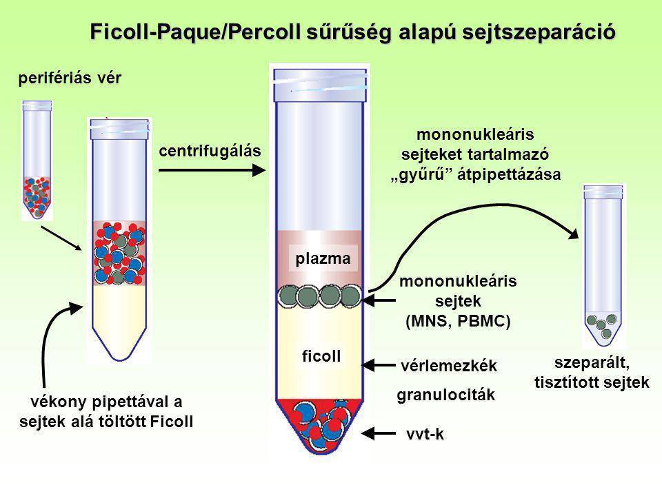 B A jelölés az elsődleges antigén-ellenanyag kapcsolódáson alapul NK Th TcImmunfenotipizálás Pl.: a CD4+ (helper) és a CD8+ (citotoxikus) T sejtek arányának Meghatározása perifériás vérben Jelölő anyagok: FITC jelzéssel ellátott anti-CD4 ellenanyag (α-CD4-FITC) PE jelzéssel ellátott anti-CD8 ellenanyag (α-CD8-PE) A perifériás vérben jelenlévő limfociták egy részéhez specifikusan kötődik a megfelelő ellenanyag