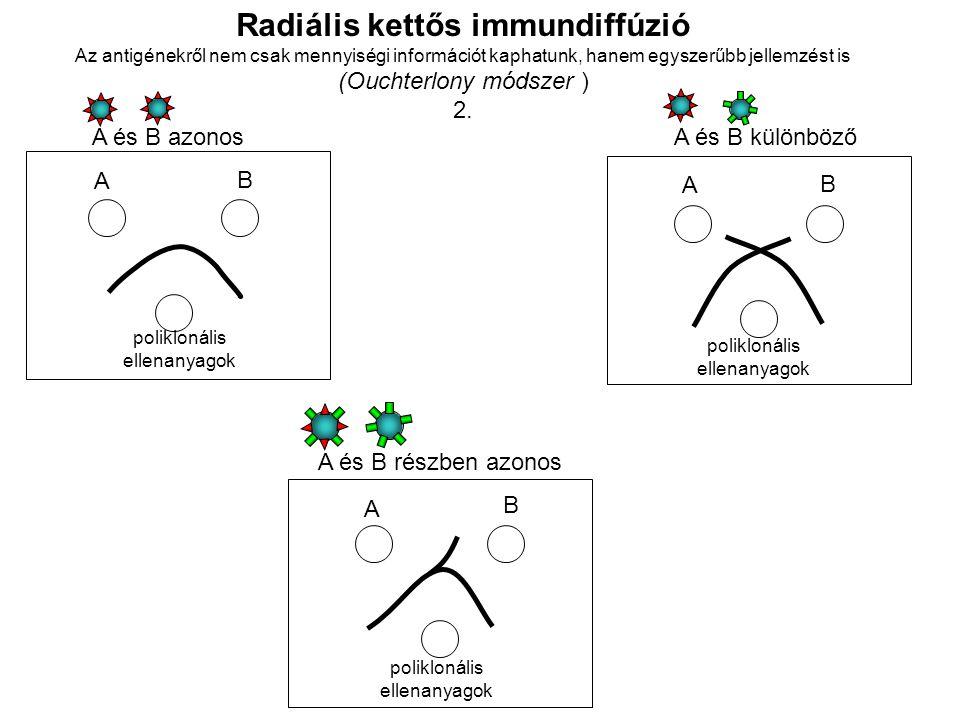 Radiális kettős immundiffúzió Az antigénekről nem csak mennyiségi információt kaphatunk, hanem egyszerűbb jellemzést is (Ouchterlony módszer ) 2. poli