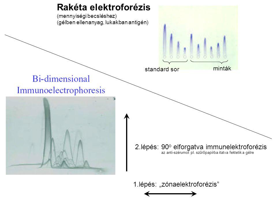 """Rakéta elektroforézis (mennyiségi becsléshez) (gélben ellenanyag, lukakban antigén) standard sor minták 1.lépés: """"zónaelektroforézis 2.lépés: 90 o elforgatva immunelektroforézis az anti-szérumot pl."""