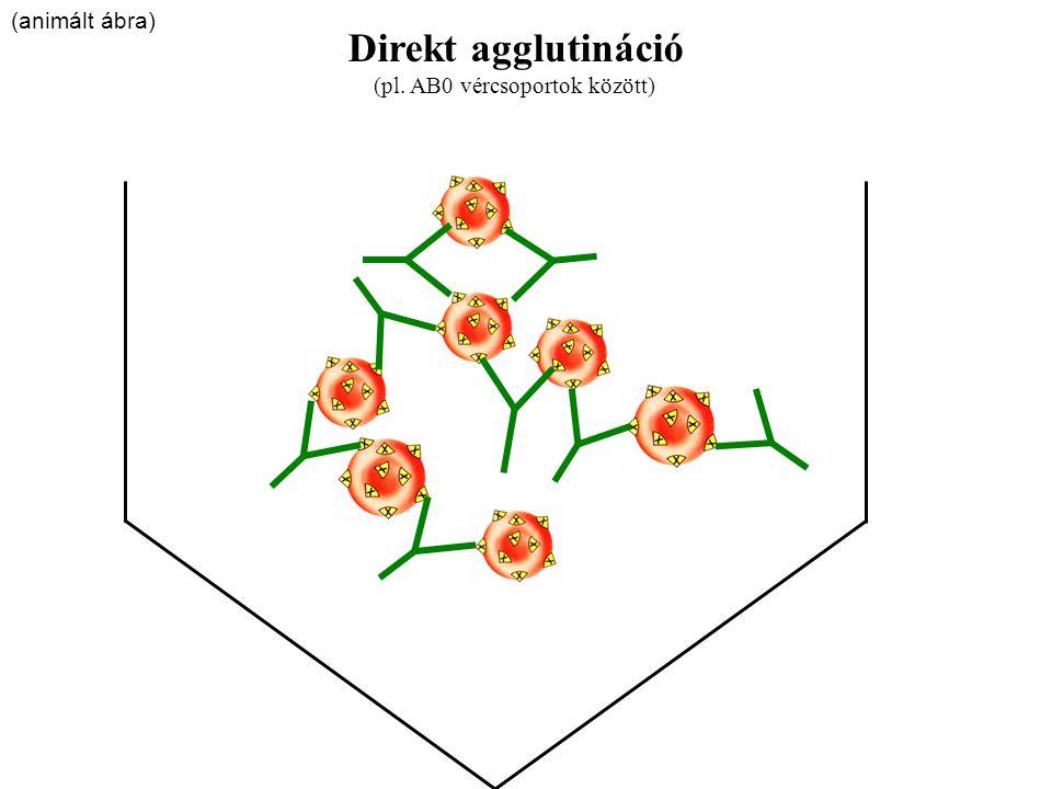 Direkt agglutináció (pl. AB0 vércsoportok között) (animált ábra)