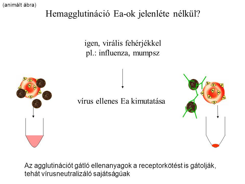 Hemagglutináció Ea-ok jelenléte nélkül? igen, virális fehérjékkel pl.: influenza, mumpsz vírus ellenes Ea kimutatása Az agglutinációt gátló ellenanyag