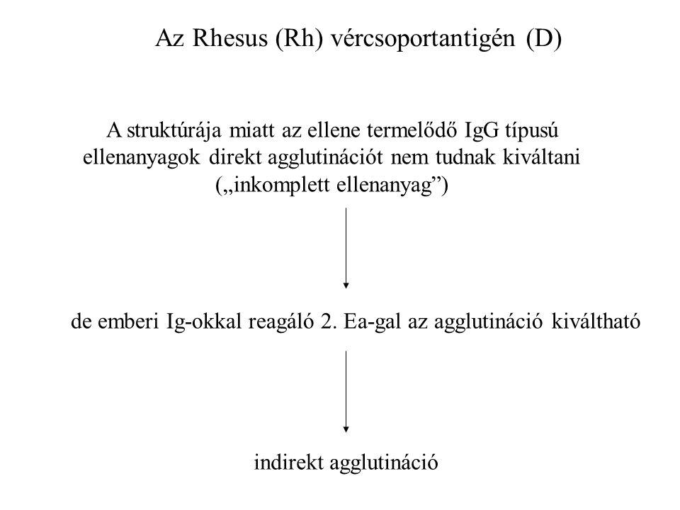 """Az Rhesus (Rh) vércsoportantigén (D) A struktúrája miatt az ellene termelődő IgG típusú ellenanyagok direkt agglutinációt nem tudnak kiváltani (""""inkomplett ellenanyag ) de emberi Ig-okkal reagáló 2."""