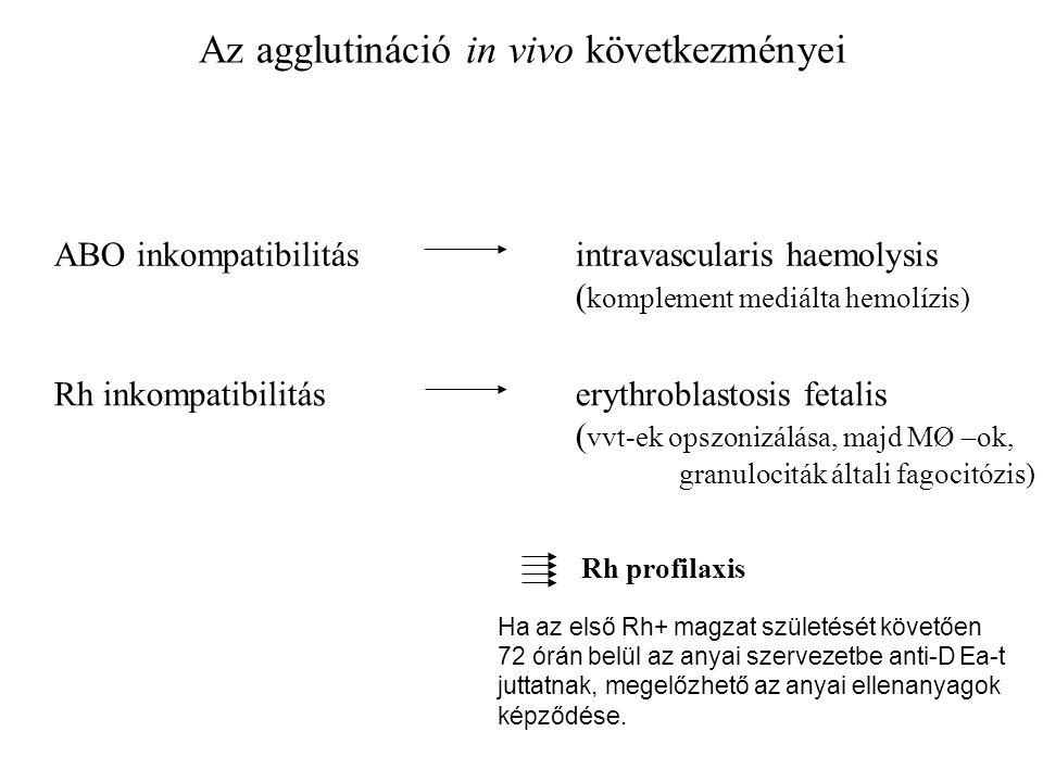 Az agglutináció in vivo következményei ABO inkompatibilitásintravascularis haemolysis ( komplement mediálta hemolízis) Rh inkompatibilitáserythroblastosis fetalis ( vvt-ek opszonizálása, majd MØ –ok, granulociták általi fagocitózis) Rh profilaxis Ha az első Rh+ magzat születését követően 72 órán belül az anyai szervezetbe anti-D Ea-t juttatnak, megelőzhető az anyai ellenanyagok képződése.