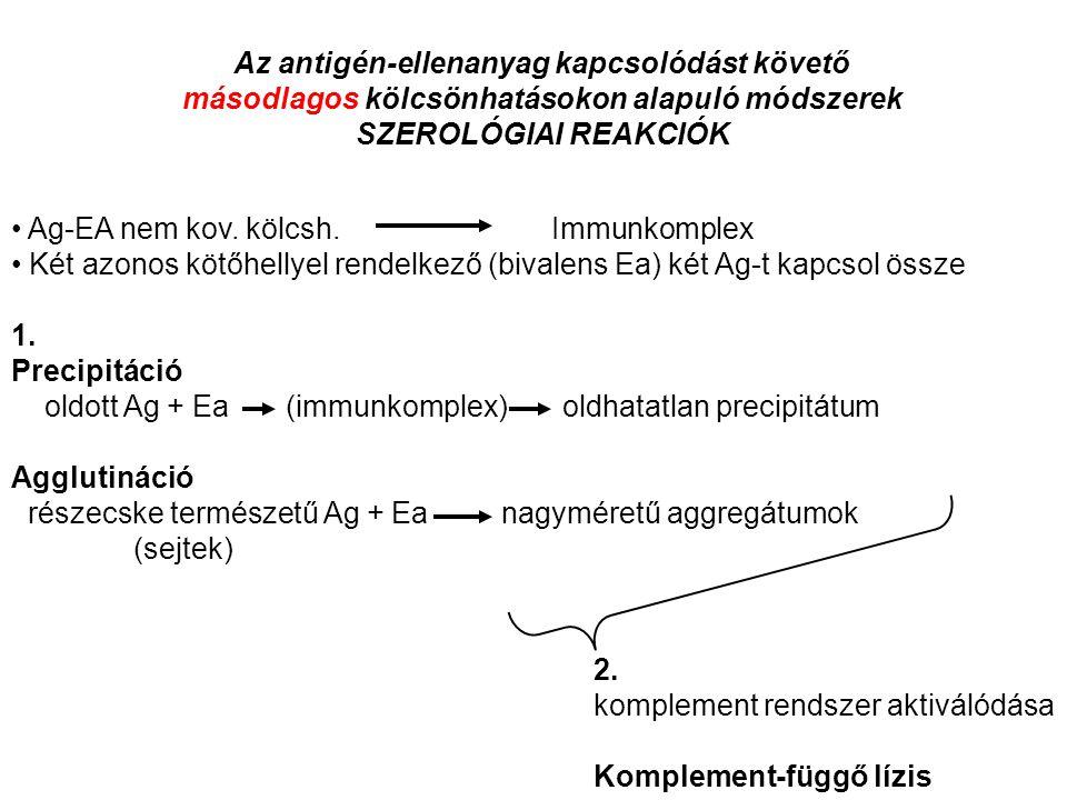 Az antigén-ellenanyag kapcsolódást követő másodlagos kölcsönhatásokon alapuló módszerek SZEROLÓGIAI REAKCIÓK Ag-EA nem kov. kölcsh. Immunkomplex Két a