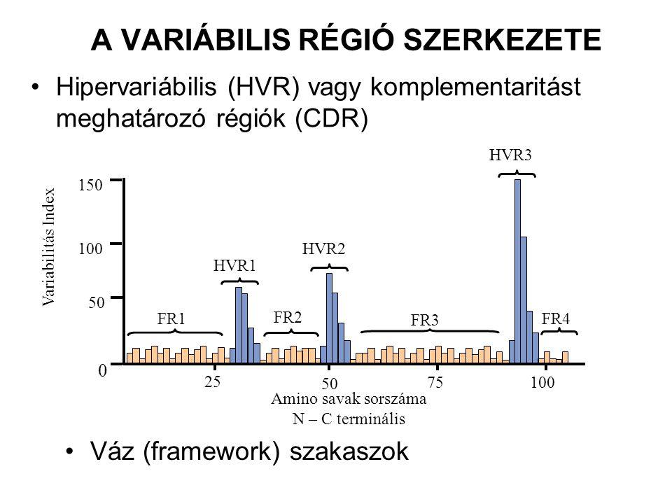 A VARIÁBILIS RÉGIÓ SZERKEZETE Hipervariábilis (HVR) vagy komplementaritást meghatározó régiók (CDR) HVR3 FR1 FR2 FR3 FR4 HVR1 HVR2 Variabilitás Index