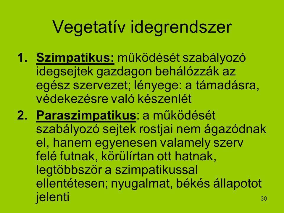 30 Vegetatív idegrendszer 1.Szimpatikus: működését szabályozó idegsejtek gazdagon behálózzák az egész szervezet; lényege: a támadásra, védekezésre val
