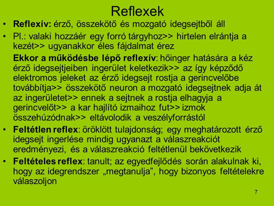 7 Reflexek Reflexív: érző, összekötő és mozgató idegsejtből áll Pl.: valaki hozzáér egy forró tárgyhoz>> hirtelen elrántja a kezét>> ugyanakkor éles f