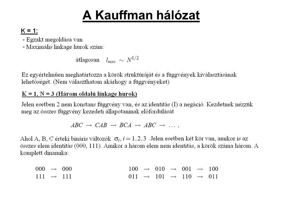 A Kauffman hálózat