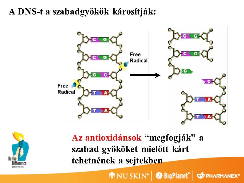 A DNS-t a szabadgyökök károsítják: Az antioxidánsok megfogják a szabad gyököket mielőtt kárt tehetnének a sejtekben