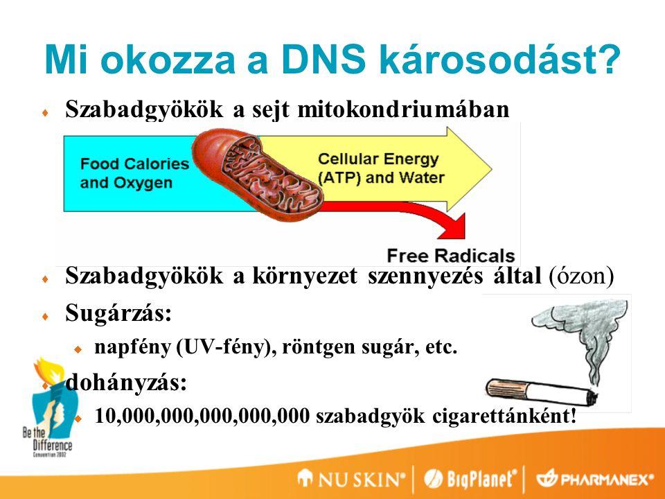 Mi okozza a DNS károsodást.