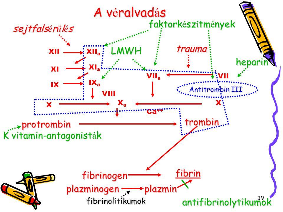 19 Av é ralvad á s A v é ralvad á sfibrinogen fibrin trombin protrombin Ca ++ XaXa XIIXII a XI XI a IX IX a X X VIII VII a VII sejtfals é r ü l é s tr