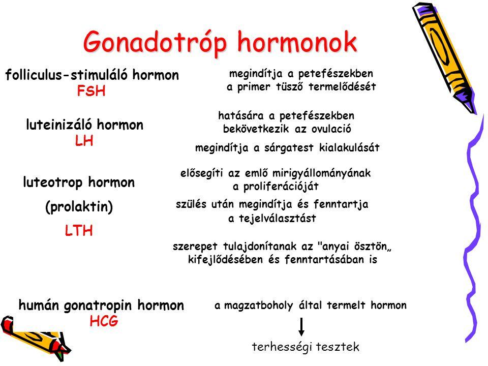 Gonadotróp hormonok folliculus-stimuláló hormon FSH luteinizáló hormon LH luteotrop hormon (prolaktin) LTH megindítja a petefészekben a primer tüsző t