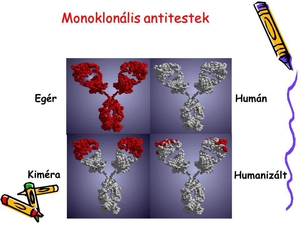Monoklonális antitestek Egér Kiméra Humán Humanizált