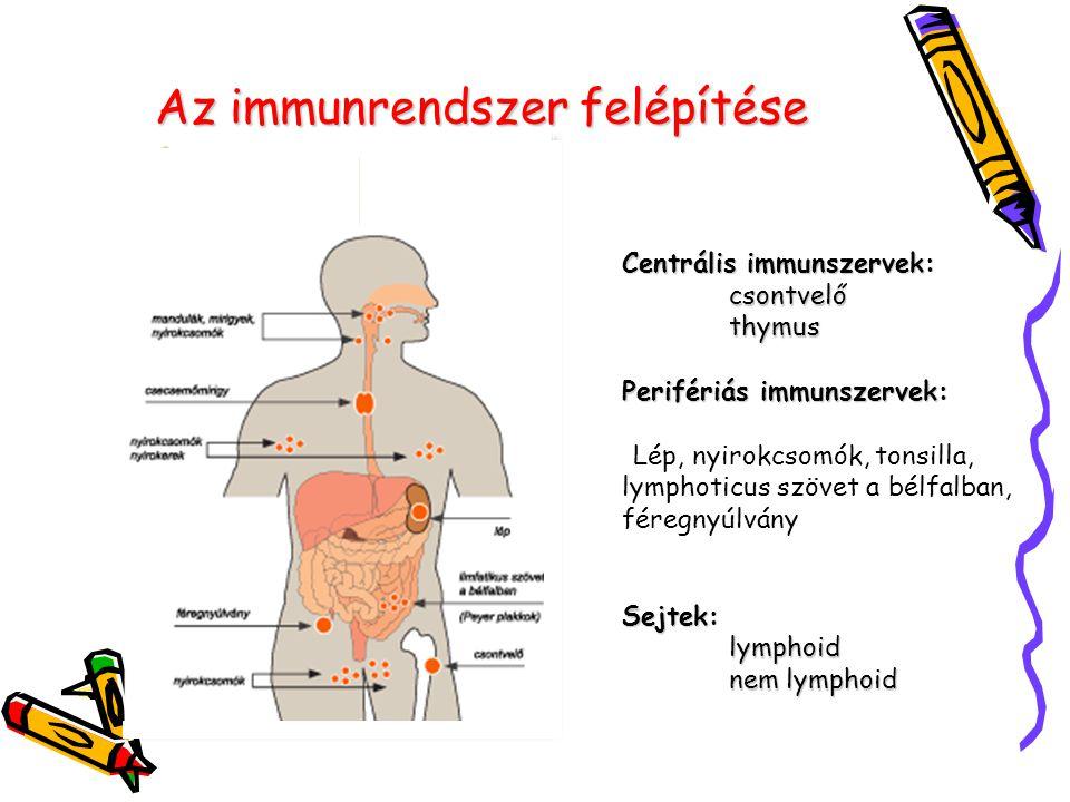 Az immunrendszer felépítése Centrális immunszervek: csontvelő thymus Perifériás immunszervek: Centrális immunszervek: csontvelő thymus Perifériás immu