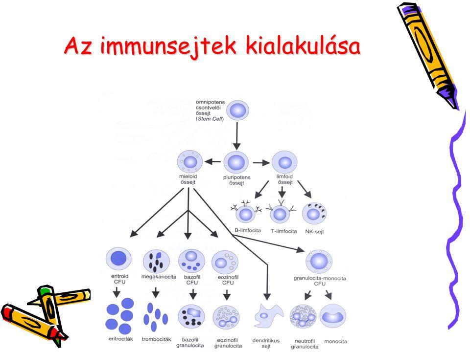 Az immunsejtek kialakulása