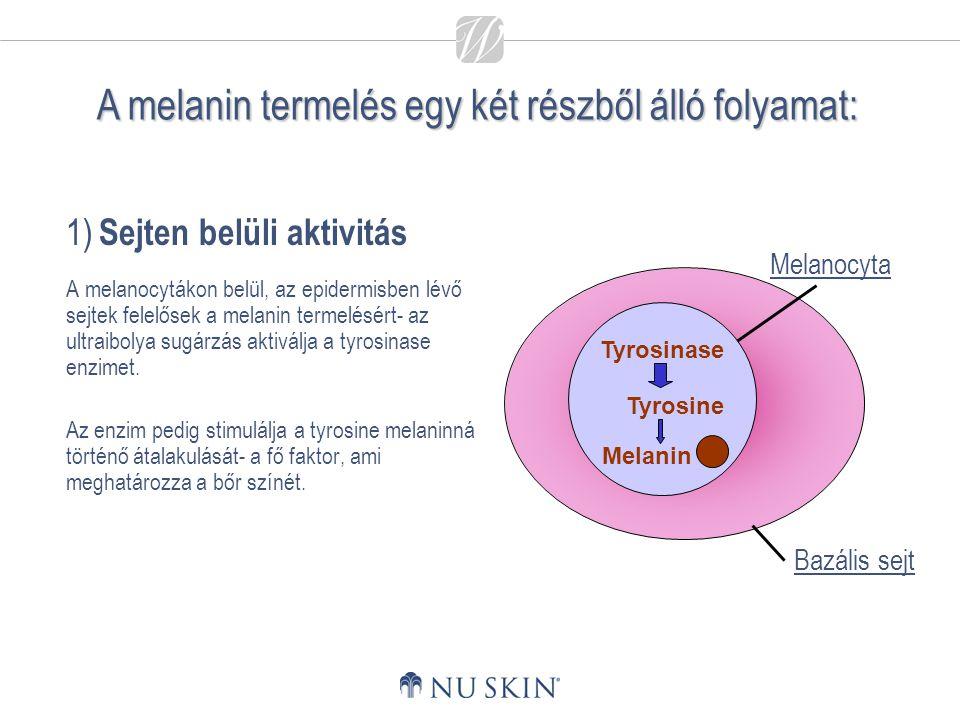 1) Sejten belüli aktivitás A melanocytákon belül, az epidermisben lévő sejtek felelősek a melanin termelésért- az ultraibolya sugárzás aktiválja a tyr