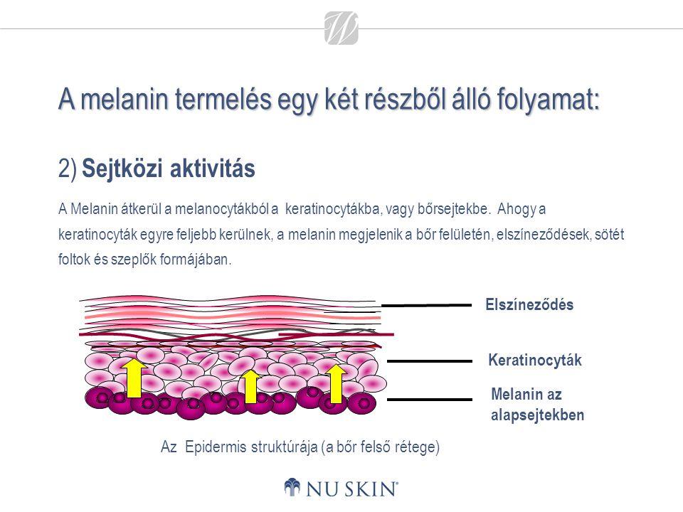 A melanin termelés egy két részből álló folyamat: 2) Sejtközi aktivitás A Melanin átkerül a melanocytákból a keratinocytákba, vagy bőrsejtekbe. Ahogy