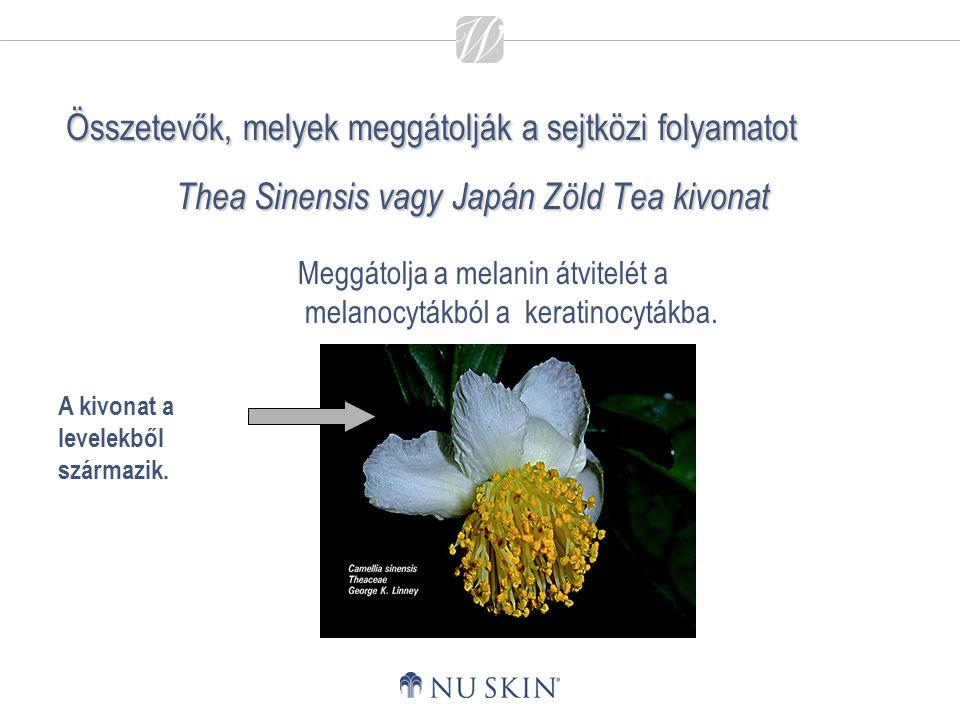 Thea Sinensis vagy Japán Zöld Tea kivonat A kivonat a levelekből származik. Meggátolja a melanin átvitelét a melanocytákból a keratinocytákba. Összete