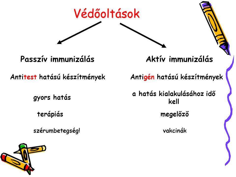 Védőoltások Passzív immunizálásAktív immunizálás Antitest hatású készítményekAntigén hatású készítmények gyors hatás a hatás kialakulásához idő kell t