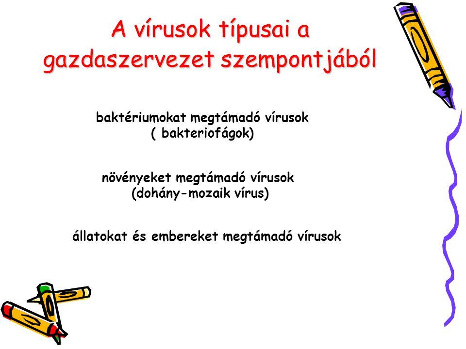 Baktériumok elleni védőoltások Meningococcus Mencevax Menpovax poliszaccharid antigén Typhus abdominalis Vivityph Typhym Vi Typherix tisztított poliszaccharid Menjugate Meningotec Meningococcal Neis-Vac konjugált polisaccharid élő, attenuált