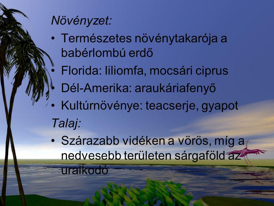 Növényzet: Természetes növénytakarója a babérlombú erdő Florida: liliomfa, mocsári ciprus Dél-Amerika: araukáriafenyő Kultúrnövénye: teacserje, gyapot