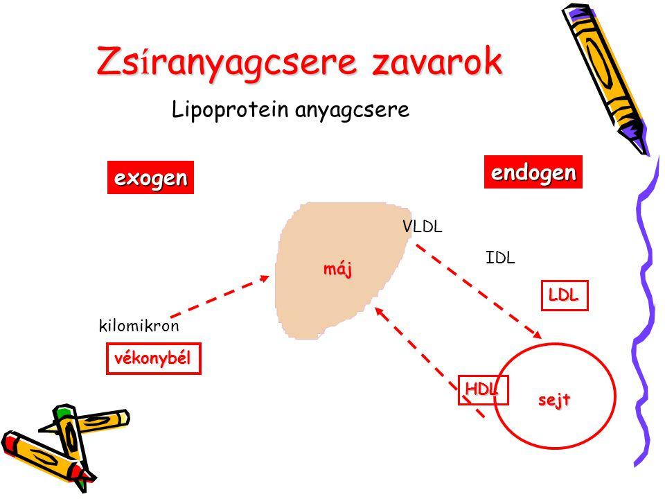 Zs í ranyagcsere zavarok Lipoprotein anyagcsere exogen máj vékonybél kilomikron endogen sejt VLDL IDL LDL HDL