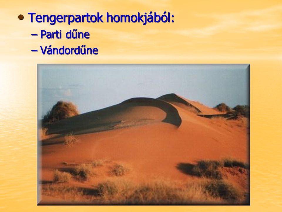Tengerpartok homokjából: Tengerpartok homokjából: –Parti dűne –Vándordűne
