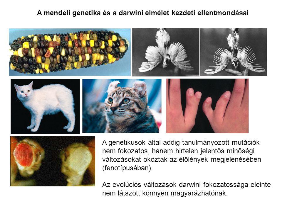 A mendeli genetika és a darwini elmélet kezdeti ellentmondásai A genetikusok által addig tanulmányozott mutációk nem fokozatos, hanem hirtelen jelentő