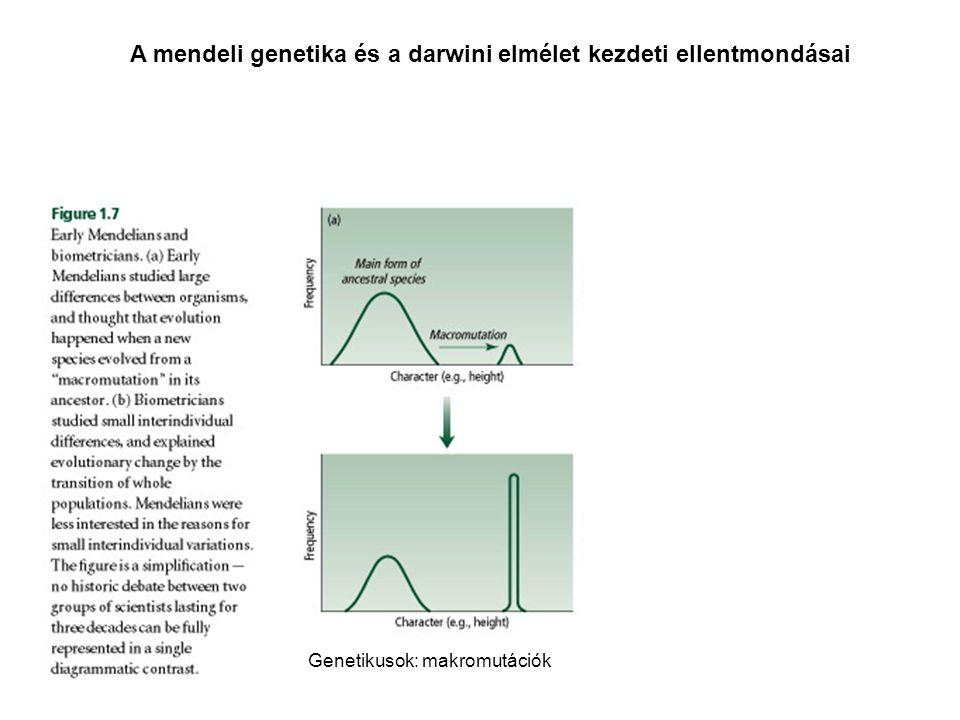 A mendeli genetika és a darwini elmélet kezdeti ellentmondásai Genetikusok: makromutációkBiometrikusok: mikrováltozások