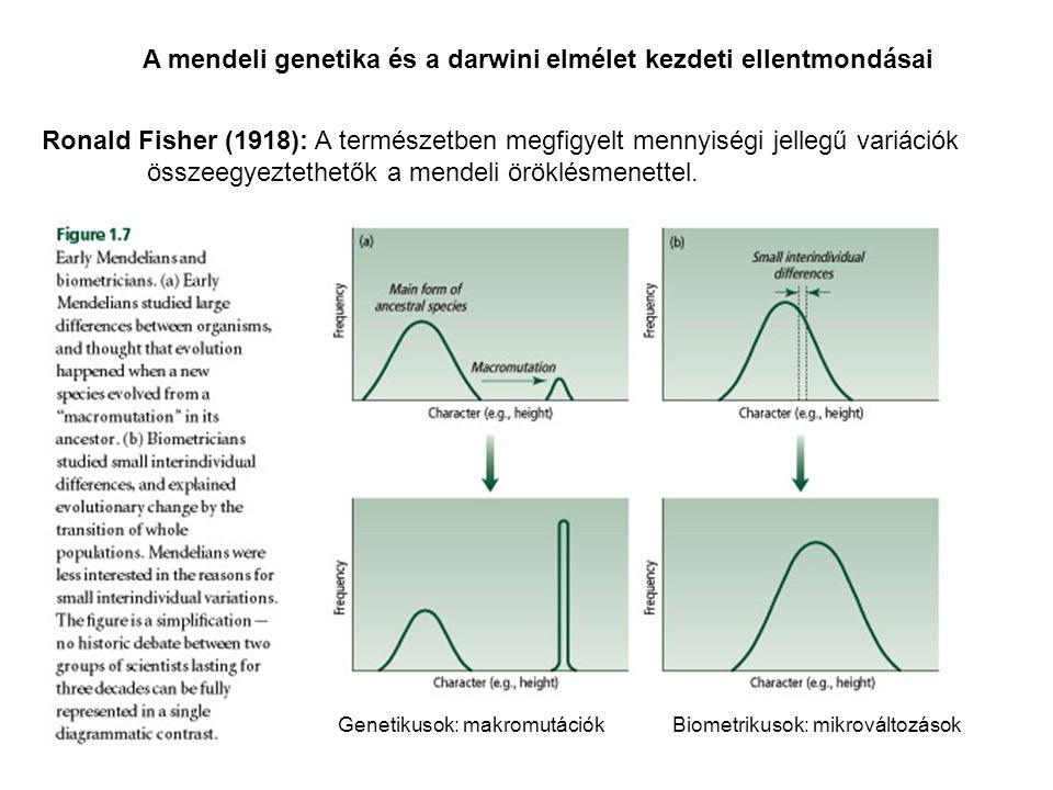 A mendeli genetika és a darwini elmélet kezdeti ellentmondásai Genetikusok: makromutációkBiometrikusok: mikrováltozások Ronald Fisher (1918): A termés