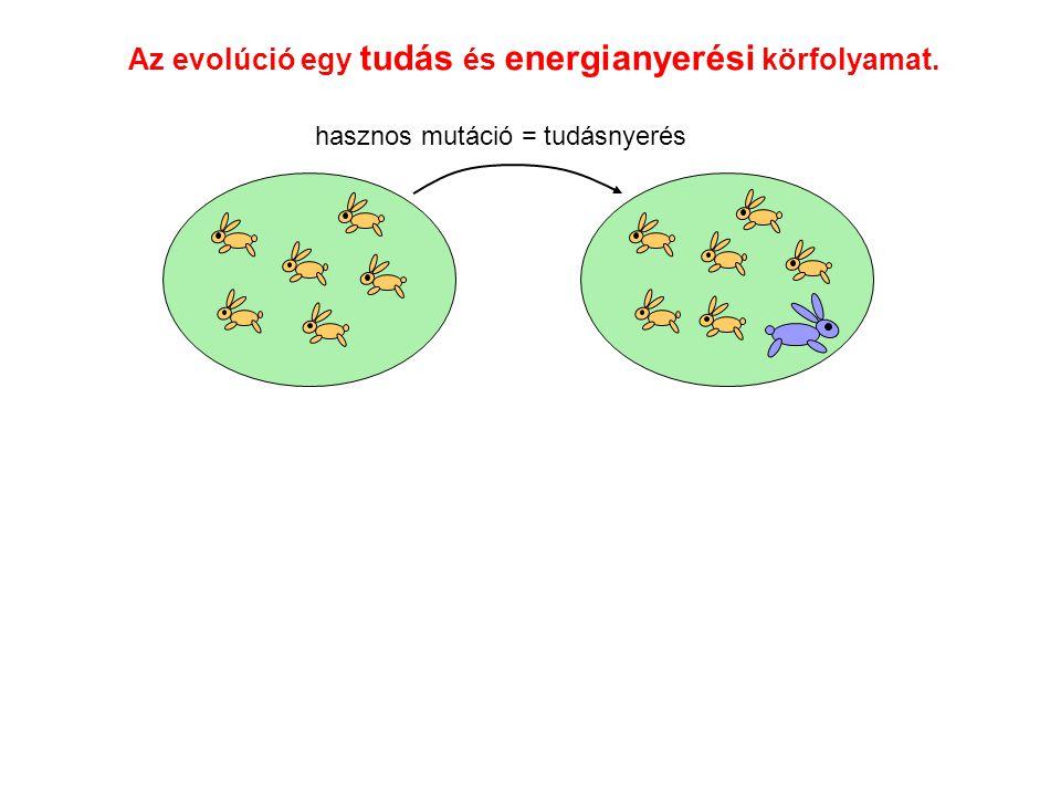 Az evolúció egy tudás és energianyerési körfolyamat. hasznos mutáció = tudásnyerés