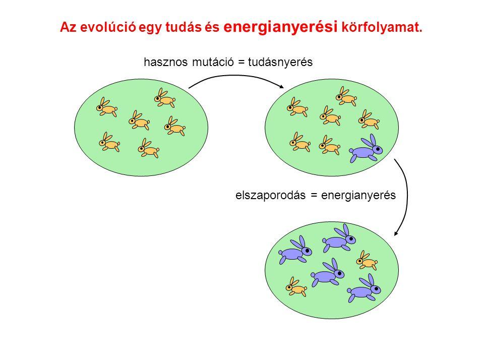 Az evolúció egy tudás és energianyerési körfolyamat. hasznos mutáció = tudásnyerés elszaporodás = energianyerés