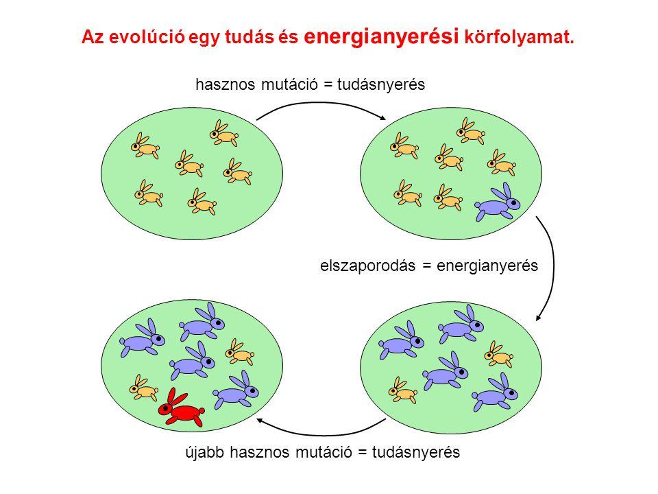 Az evolúció egy tudás és energianyerési körfolyamat. hasznos mutáció = tudásnyerés elszaporodás = energianyerés újabb hasznos mutáció = tudásnyerés