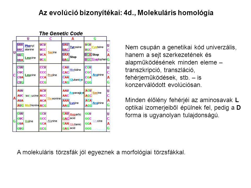 Az evolúció bizonyítékai: 4d., Molekuláris homológia Nem csupán a genetikai kód univerzális, hanem a sejt szerkezetének és alapműködésének minden elem
