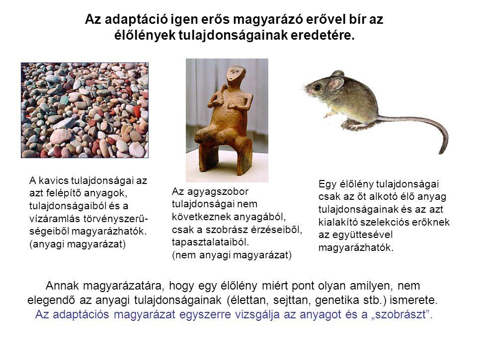 Az adaptáció igen erős magyarázó erővel bír az élőlények tulajdonságainak eredetére. A kavics tulajdonságai az azt felépítő anyagok, tulajdonságaiból
