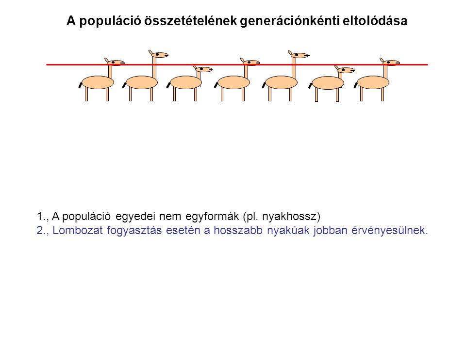 A populáció összetételének generációnkénti eltolódása 1., A populáció egyedei nem egyformák (pl. nyakhossz) 2., Lombozat fogyasztás esetén a hosszabb
