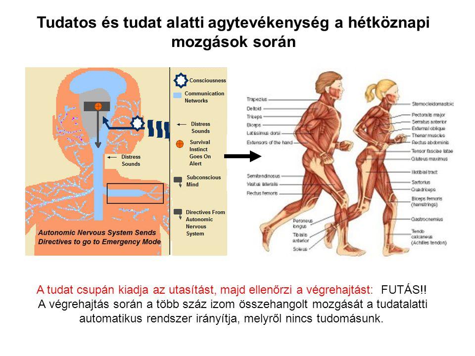 Tudatos és tudat alatti agytevékenység a hétköznapi mozgások során A tudat csupán kiadja az utasítást, majd ellenőrzi a végrehajtást: FUTÁS!! A végreh