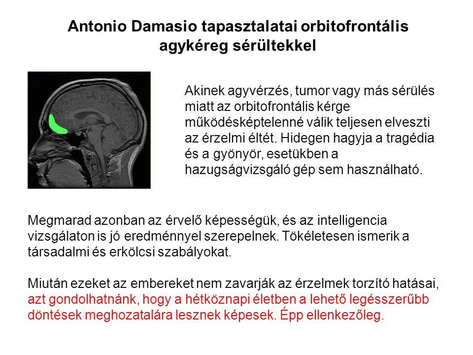 Antonio Damasio tapasztalatai orbitofrontális agykéreg sérültekkel Megmarad azonban az érvelő képességük, és az intelligencia vizsgálaton is jó eredmé