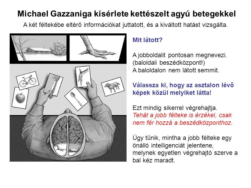 Michael Gazzaniga kísérlete kettészelt agyú betegekkel Mit látott? A jobboldalit pontosan megnevezi. (baloldali beszédközpont!) A baloldalon nem látot