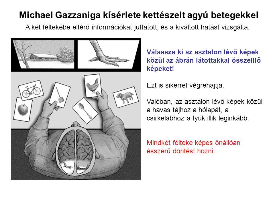 Michael Gazzaniga kísérlete kettészelt agyú betegekkel Válassza ki az asztalon lévő képek közül az ábrán látottakkal összeillő képeket! Ezt is sikerre