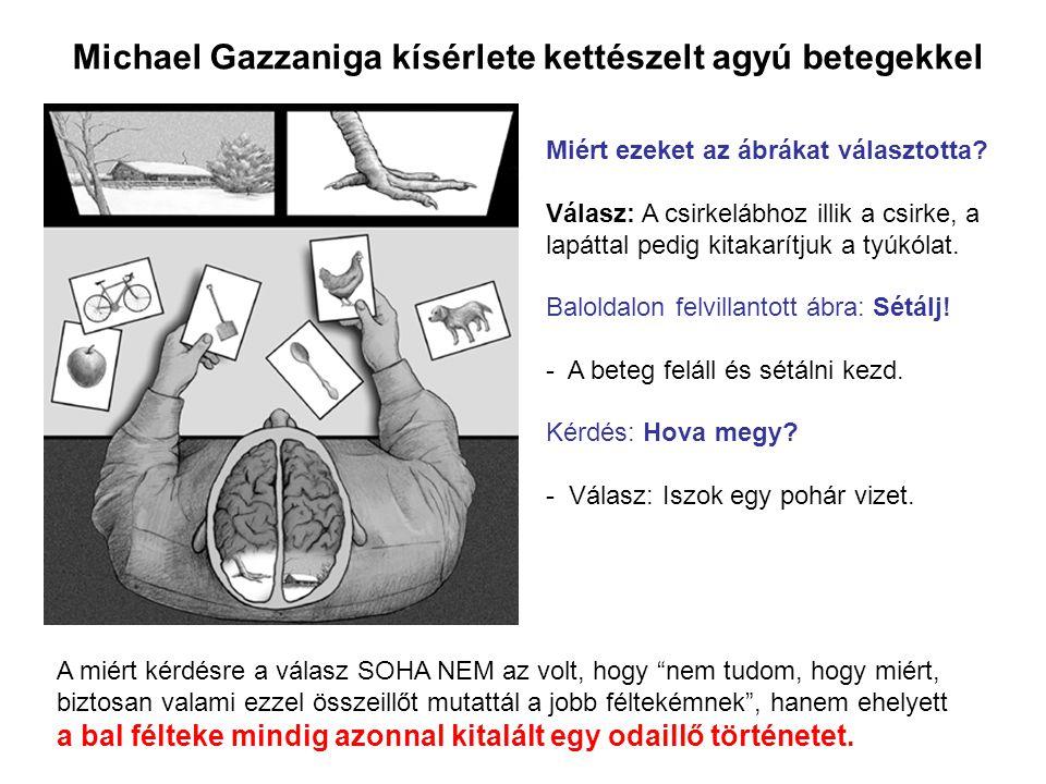 Michael Gazzaniga kísérlete kettészelt agyú betegekkel Miért ezeket az ábrákat választotta? Válasz: A csirkelábhoz illik a csirke, a lapáttal pedig ki